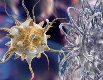 无敌细菌是什么意思?