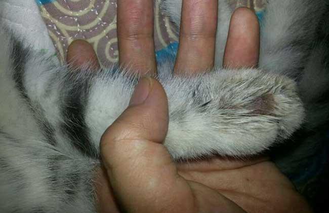 猫癣会传染人吗?