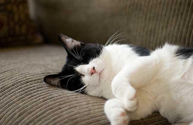 猫的寿命是多少年?