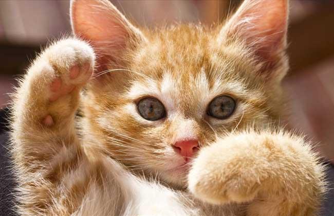 梦见猫是什么意思?