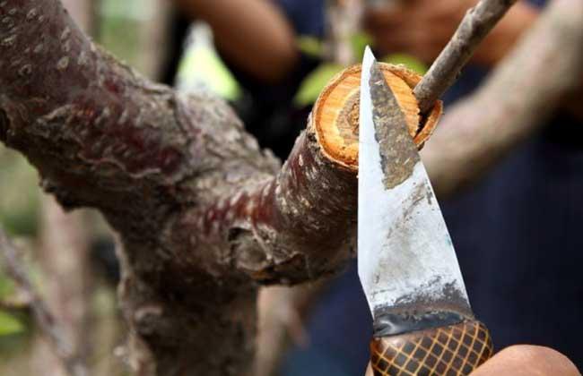 果树有哪些嫁接方法?