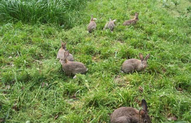 思麻兔养殖技术