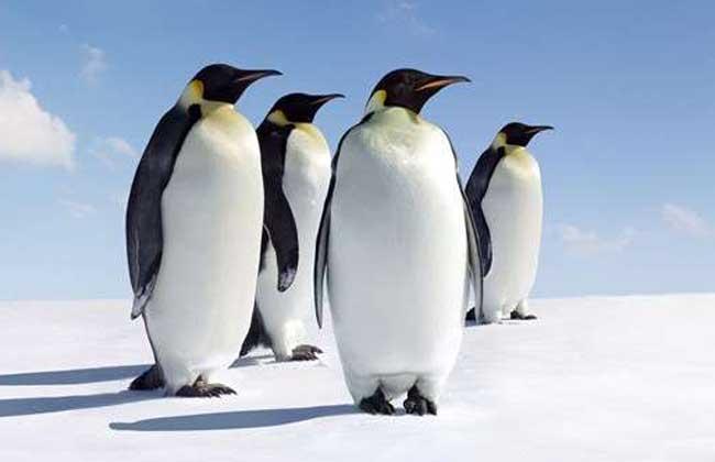 北极有企鹅吗