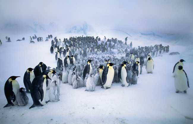 企鹅是鸟类吗