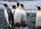 企鹅是鸟类吗?