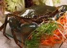 三门青蟹什么时候最肥?
