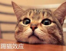 踢猫效应是什么意思?