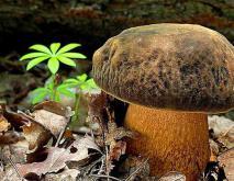 野生菌种类名称及图片大全