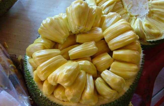 菠萝蜜的核能吃吗