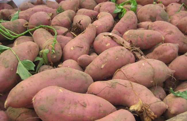 红薯减肥法