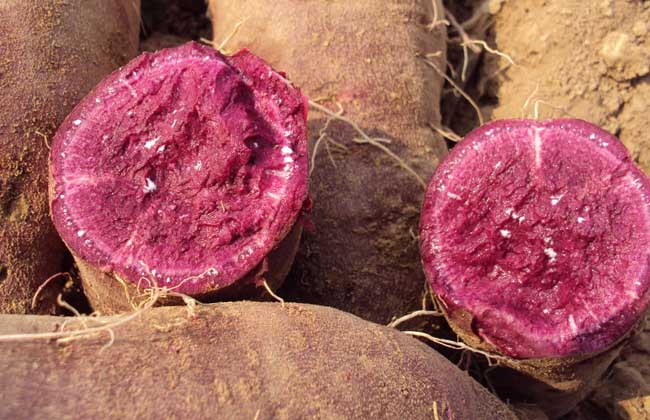 紫薯和红薯哪个更减肥?