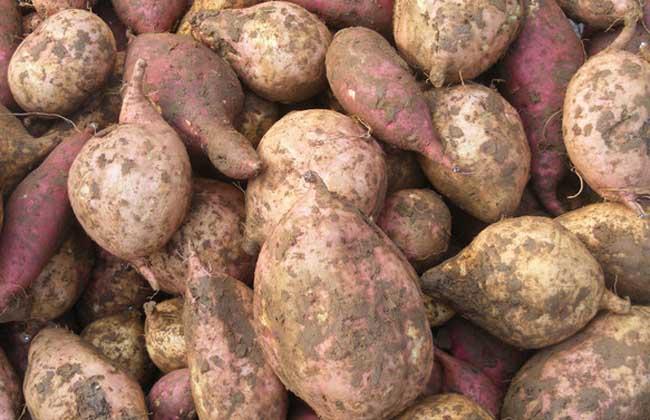 红薯和土豆哪个减肥?