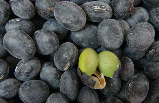 黑豆怎么吃最有营养?