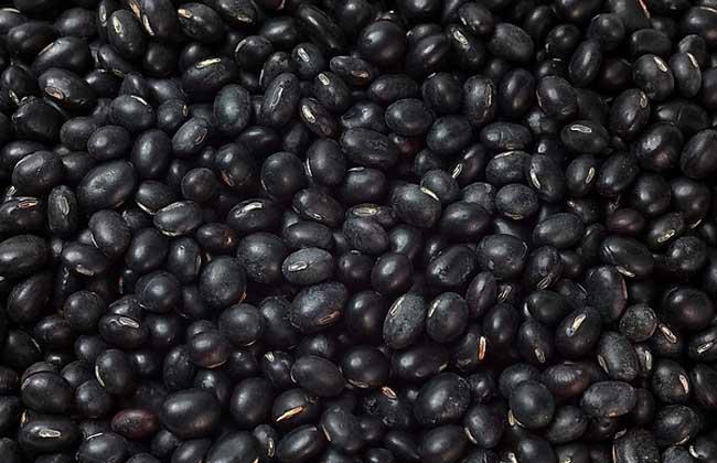黑豆的营养价值
