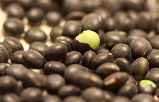 醋泡黑豆什么时候吃