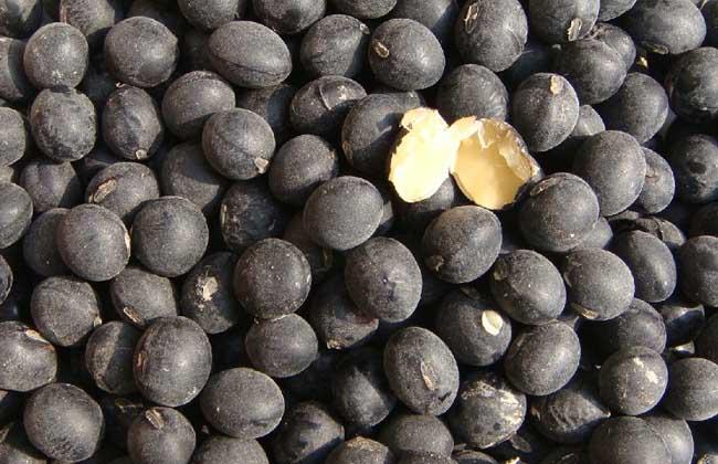 黑豆怎么吃最补肾?