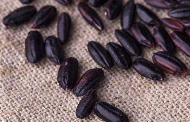 吃黑米可以补肾吗?