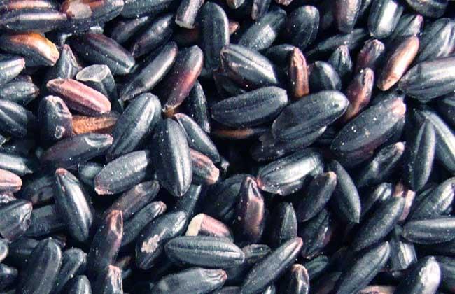 吃黑米有什么好处