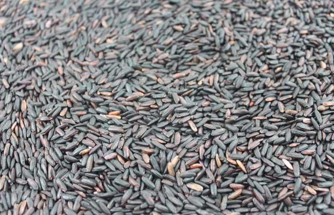 紫米和黑米的区别