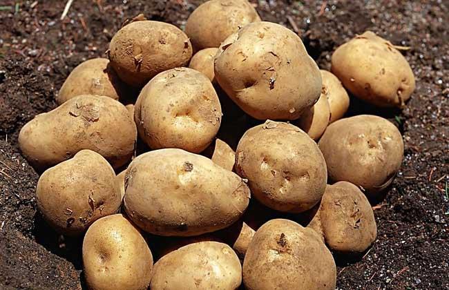 土豆的家常做法大全