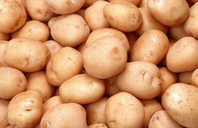 马铃薯的家常做法大全