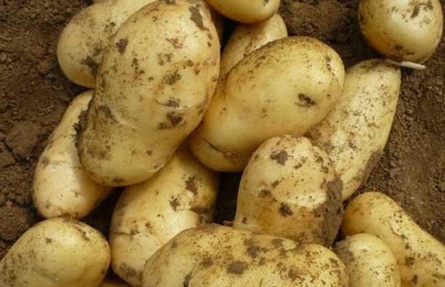 土豆和鸡蛋能一起吃吗