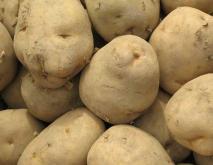 土豆种植技术视频
