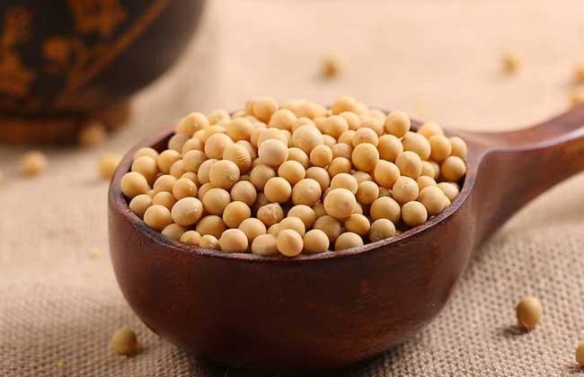 黄豆的家常做法大全