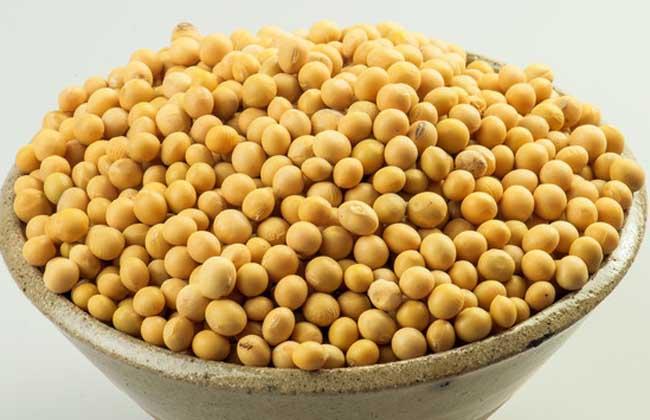 大豆卵磷脂的功效与作用
