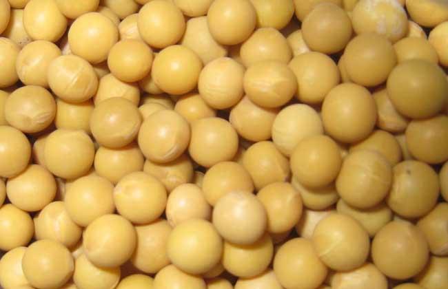 吃黄豆有什么好处?