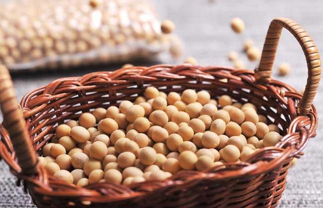 孕妇可以吃黄豆吗