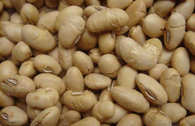 吃炒黄豆会发胖吗?
