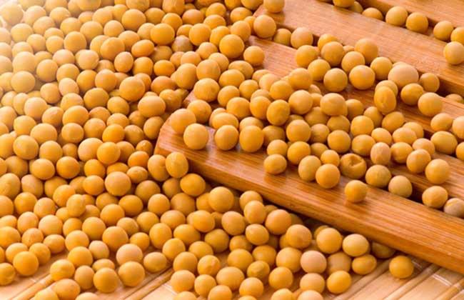 黄豆泡醋能减肥吗