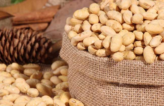 黄豆减肥法