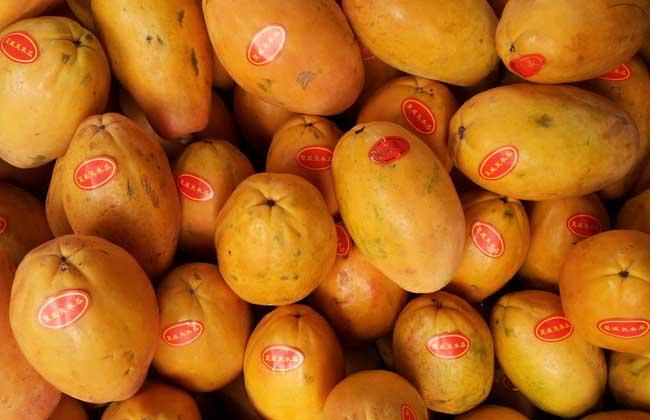 产后吃木瓜能丰胸吗