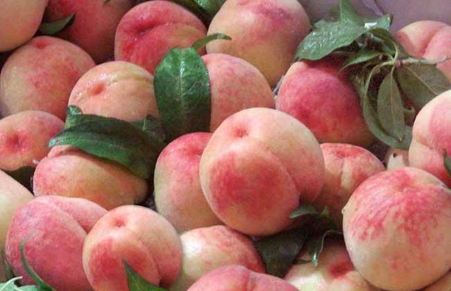 水蜜桃多少钱一斤
