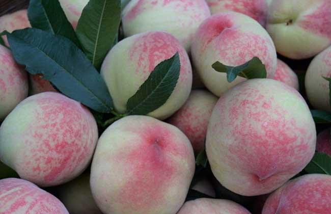 水蜜桃多少钱一斤?