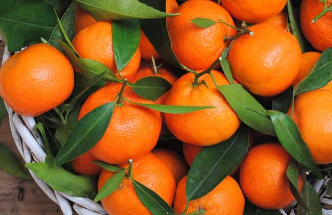 橘子不能和什么一起吃?