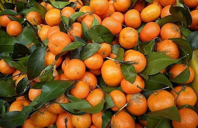 桔子和橘子的区别