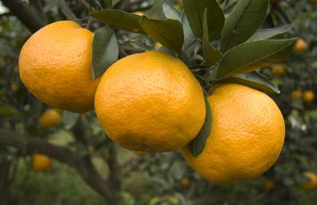 吃橘子有什么好处