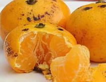 烤橘子的功效及做法