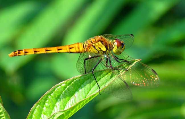 蜻蜓点水是什么意思?