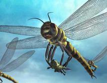 巨脉蜻蜓有多大?