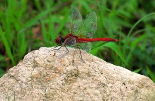 蜻蜓冬天到哪里去了?
