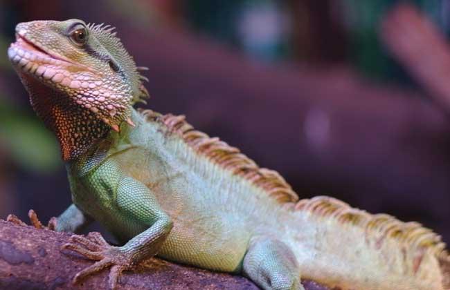 蜥蜴是什么颜色