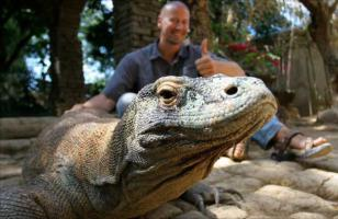 科莫多巨蜥吃人吗?