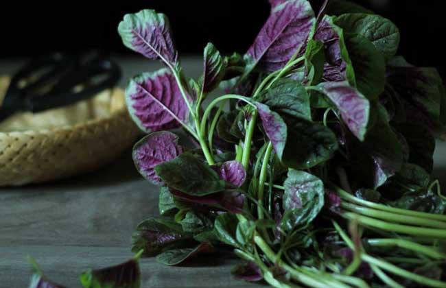 红苋菜的功效与作用
