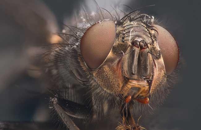梦见苍蝇是什么意思?