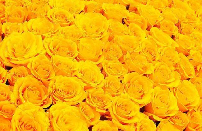 黄色情人节