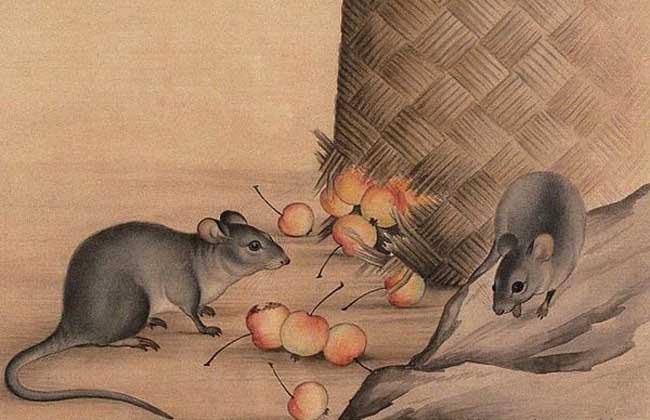 属鼠的和什么属相最配